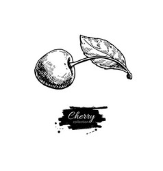 Cherry drawing isolated hand drawn berry vector