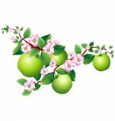 apple blossom vector image vector image