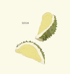 Durian king of fruit sketch vector