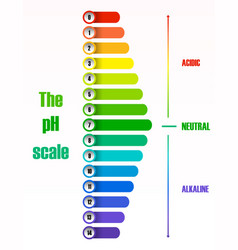 the ph scale diagram vector image