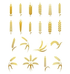 Wheat ear icon set vector