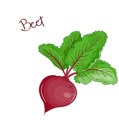 isolated cartoon fresh hand drawn beet vector image vector image