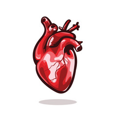 Anatomical heart vector