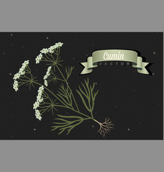 cumin realistic for design vector image