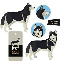 Dog breeds set siberian husky vector
