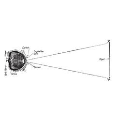 Eye focusing on object vintage vector