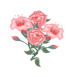 set of beautiful pink roses and tulips vector image