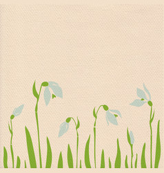 Snowdrops on paper background vector