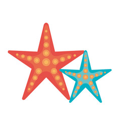 Starfish summer isolated icon vector