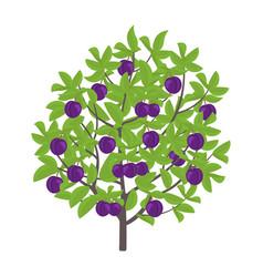 Blue plum tree damsons fruit vector