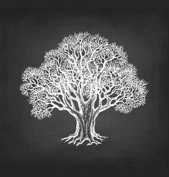 Chalk sketch oak without leaves vector