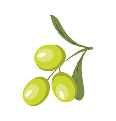 colorful of olive branch vector image