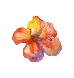 Isolated watercolor orange painting flower vector