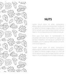 nuts banner template with place for your text vector image