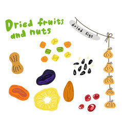 Dried fruits and nuts sketch prunes vector