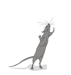 gray mouse looks up vector image