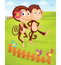 Monkey couple vector image