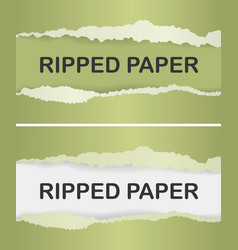 realistic ripped paper vector image