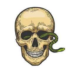 snake in human skull color sketch engraving vector image