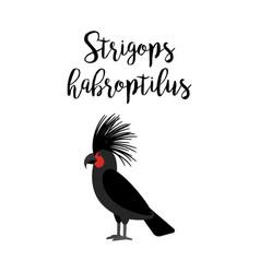Strigops habroptilus parrot bird vector