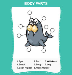 sea lion vocabulary part of body vector image vector image