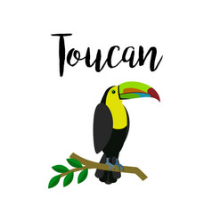 exotic tropical toucan parrot bird vector image