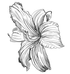 hand drawing flower 1 vector image