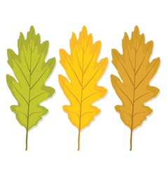 Three autumn oak leaf vector