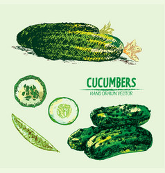 Digital detailed line art color cucumber vector