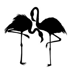 file of flamingo vector image