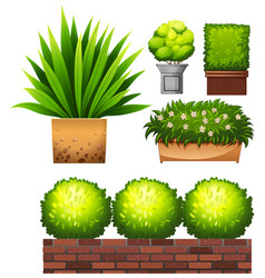 set of plant on white background vector image