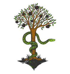 snake and tree of life color sketch engraving vector image