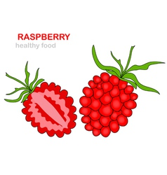 raspberry fruit vector image