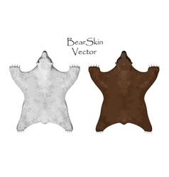 Big brown and white Bear pelt Hunting trophy vector image vector image