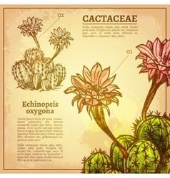 Cactus Botanical vector image