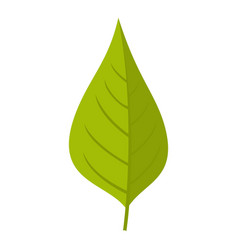 Apple tree green leaf icon isolated vector