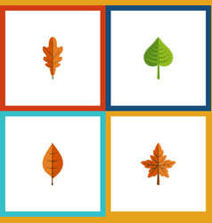 Flat icon leaves set of alder hickory linden and vector