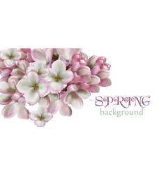lilac flowers spring background watercolor vector image