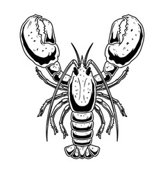 lobster in engraving style on white background vector image