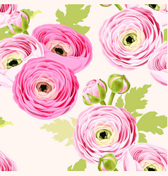 seamless pattern with ranunculus vector image