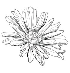 hand drawing flower 3 vector image