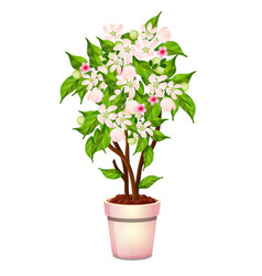 Office potted flowering tree isolated on white vector