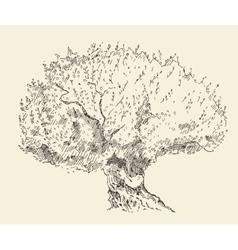 Vintage olive background Hand drawn vector