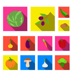 different kinds of vegetables flat icons in set vector image