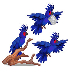 blue parrot is tied to weight isolated on vector image