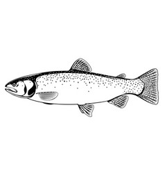 Cutthroat trout fish black and white vector