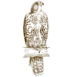 Engraving saker falcon vector