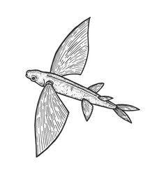 Flying fish sketch engraving vector