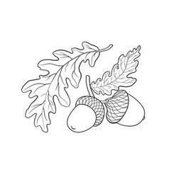 Hand drawn sketch of oak leaf branch and acorn vector
