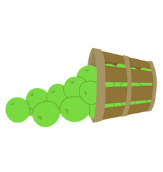 Ripe apples in bucket wooden container harvesting vector